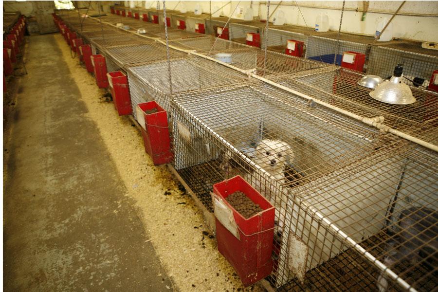 Commercial Breeder Law - FOHO WV